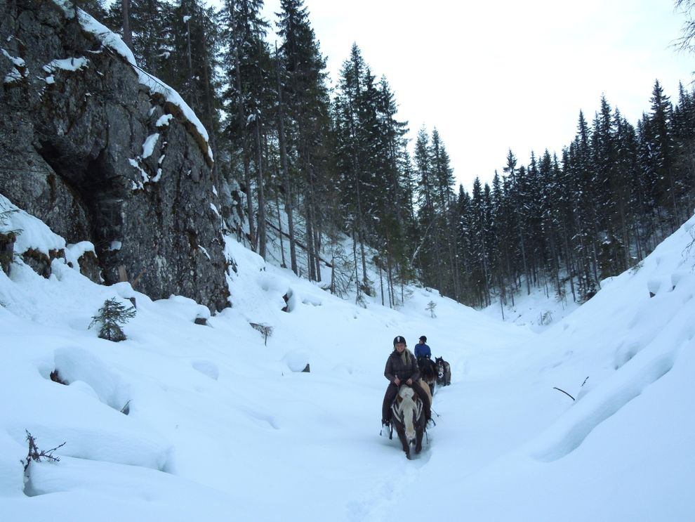 cowboy riding trip moose forest norway
